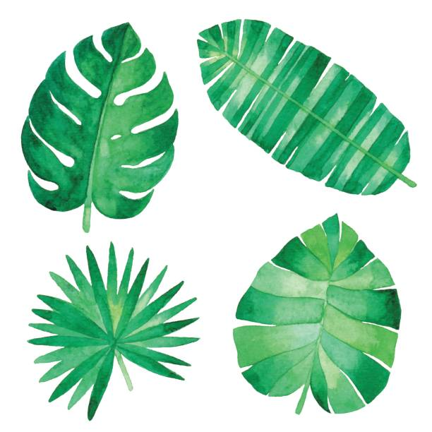 Watercolor Tropical Leaves Watercolor illustration. fruit clipart stock illustrations