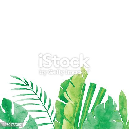 istock Watercolor Tropical Plants Background 1160172087