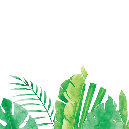 Watercolor Tropical Plants Background