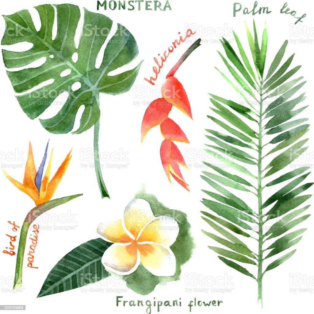 watercolor plantas tropicales - ilustración de arte vectorial