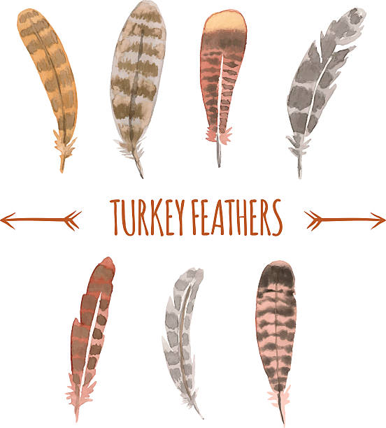 Best Turkey Feathers Illustrations, Royalty-Free Vector