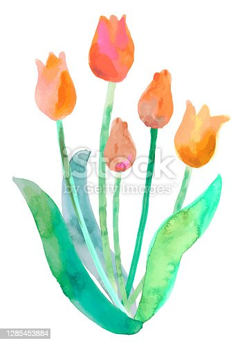 istock watercolor tulip 1285453884