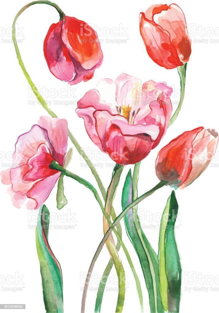 Sulu Boya Lale Boyama Stok Vektör Sanatı Ağaç çiçeğinin Daha