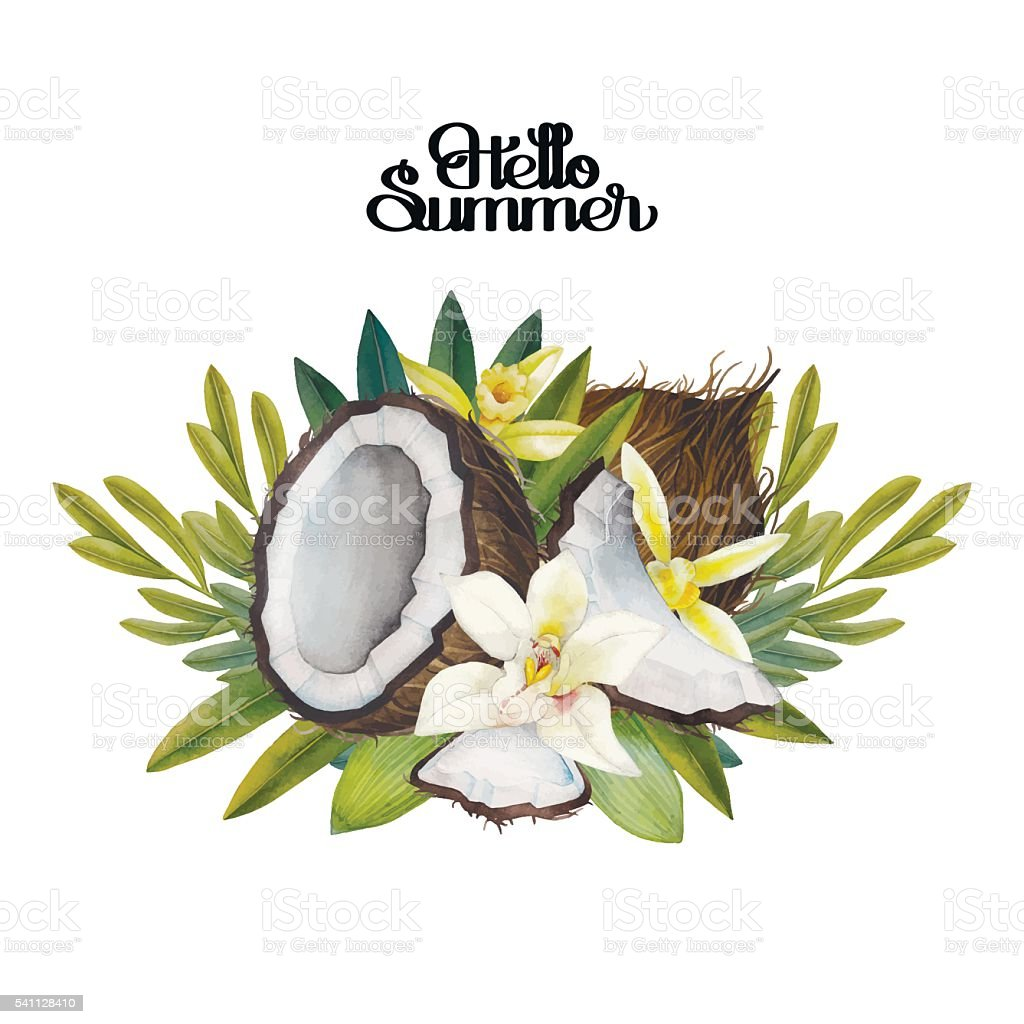 Watercolor vanilla flowers and coconut vector art illustration