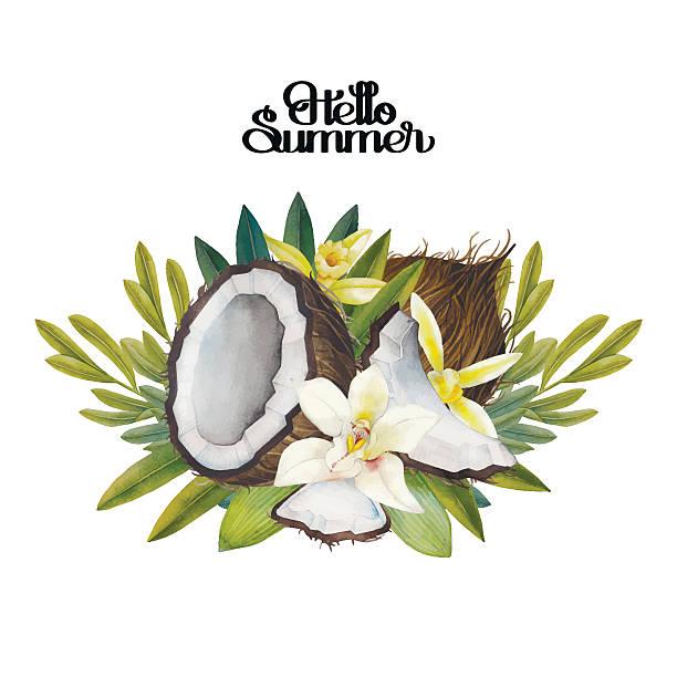 ilustrações, clipart, desenhos animados e ícones de aquarela flores de baunilha e coco - coqueiro