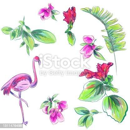 Watercolor vector 3d set of tropical illustrations
