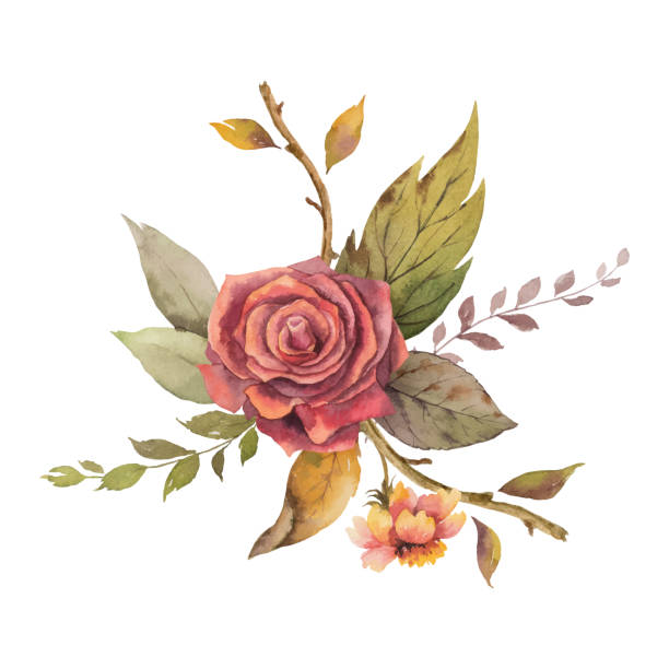 Watercolor vector autumn arrangement with rose and leaves isolated on white background. Watercolor vector autumn arrangement with rose and leaves isolated on white background. Arrangement for greeting cards, wedding invitations, invite and decorations. branch plant part stock illustrations