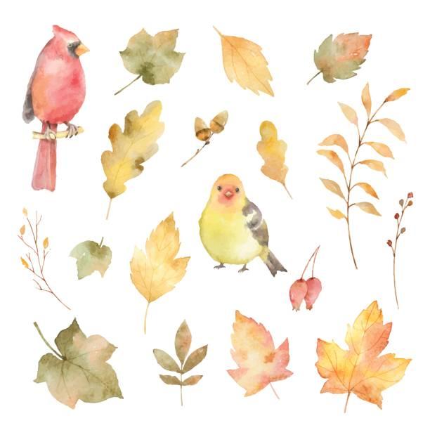 stockillustraties, clipart, cartoons en iconen met aquarel vector herfst set van bladeren en vogels geïsoleerd op een witte achtergrond. - vogel herfst