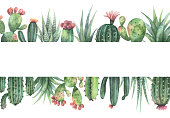 Watercolor vector banner of cacti and succulent plants isolated on white background. Flower illustration for your projects, greeting cards and invitations.