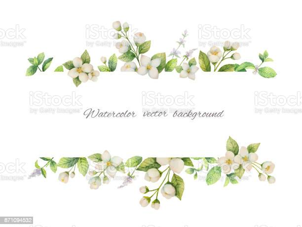 Watercolor vector banner of flowers jasmine and mint branches on vector id871094532?b=1&k=6&m=871094532&s=612x612&h=ka0o 9xo1v2lrtv7iygo4gufoyj24st9sp90akot3sg=
