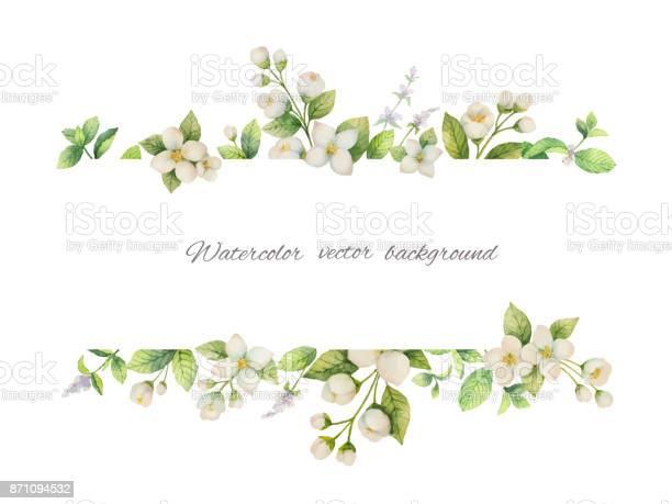 Watercolor vector banner of flowers jasmine and mint branches on vector id871094532?b=1&k=6&m=871094532&s=612x612&h=ka0o 9xo1v2lrtv7iygo4gufoyj24st9sp90akot3sg=
