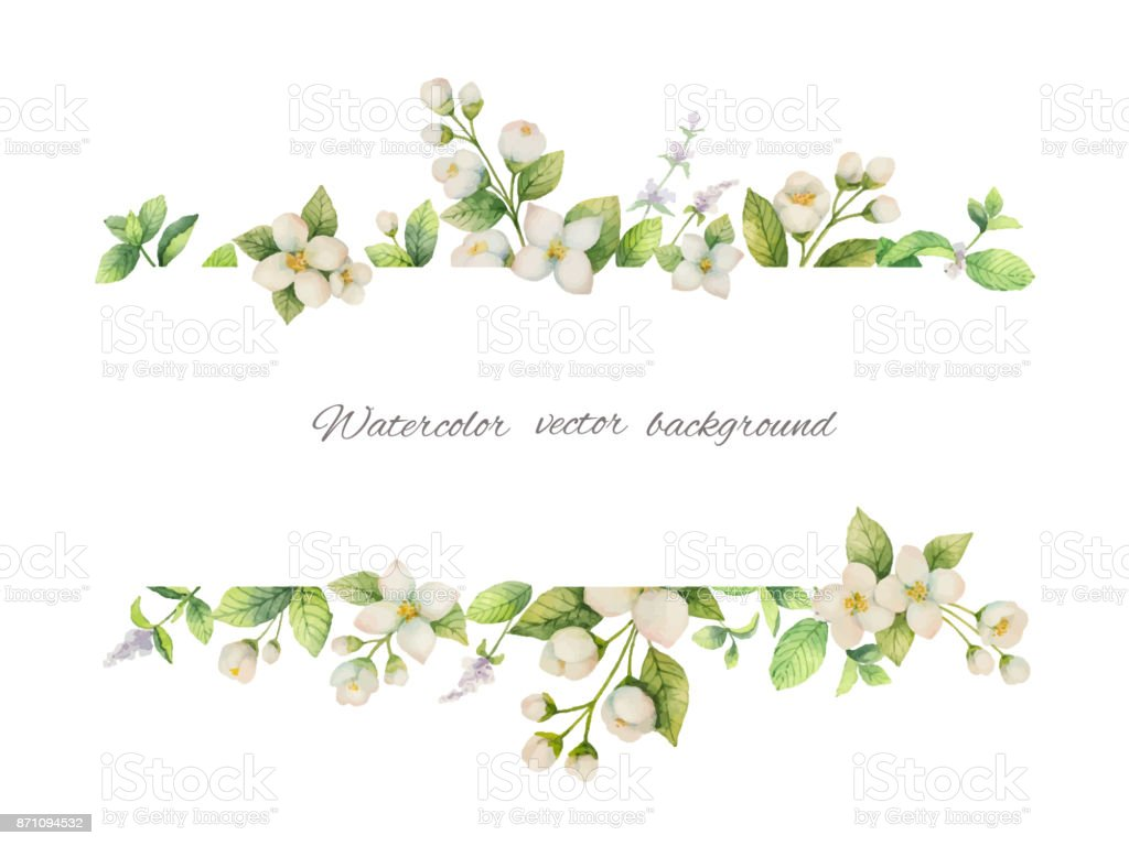 Watercolor vector banner of flowers Jasmine and mint branches isolated on white background. vector art illustration