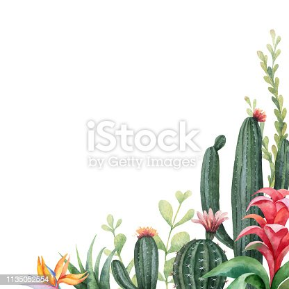 istock Watercolor vector banner tropical flowers and cacti isolated on white background. 1135052554