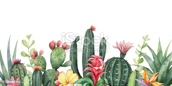 Watercolor vector banner tropical flowers and cacti isolated on white background. Illustration for design wedding invitations, greeting cards, postcards.