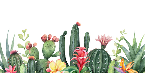 Watercolor vector banner tropical flowers and cacti isolated on white background.