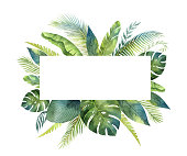 Watercolor vector banner tropical leaves and branches isolated on white background.