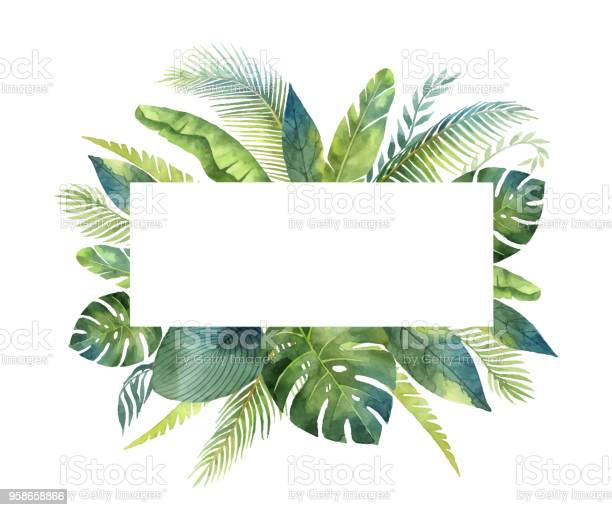 Watercolor vector banner tropical leaves and branches isolated on vector id958658866?b=1&k=6&m=958658866&s=612x612&h=kfg1rze3j5pibpt2wiigiy9y0aj5azyt2c8ck2chv6o=