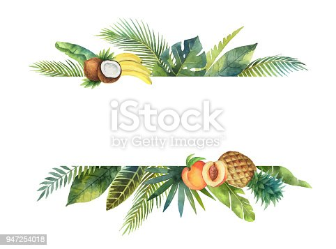 istock Watercolor vector banner tropical leaves and fruits isolated on white background. 947254018