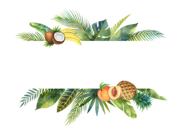 Watercolor vector banner tropical leaves and fruits isolated on white background. Watercolor banner tropical leaves and branches isolated on white background. Illustration for design wedding invitations, greeting cards, postcards. Spring or summer flowers with space for your text. banana borders stock illustrations