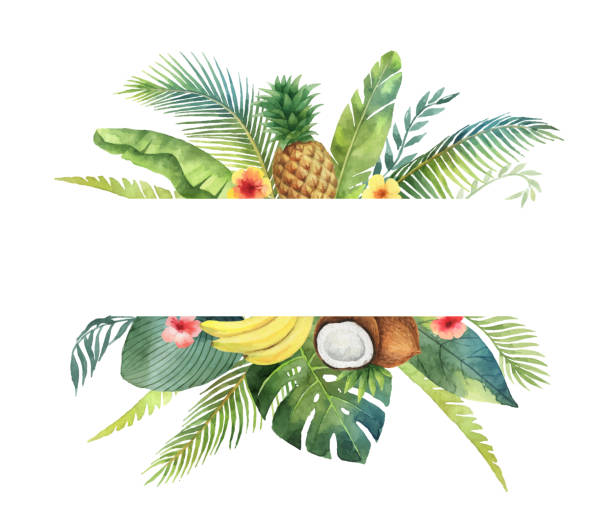 Watercolor vector banner tropical leaves and fruits isolated on white background. Watercolor vector banner tropical leaves and fruits isolated on white background. Illustration for design wedding invitations, greeting cards, postcards. banana borders stock illustrations