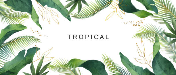 illustrazioni stock, clip art, cartoni animati e icone di tendenza di watercolor vector banner tropical leaves isolated on white background. - foglie