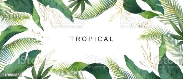 Aquarel Vector Banner Tropische Verlaat Geïsoleerd Op Witte Achtergrond Stockvectorkunst en meer beelden van Abstract