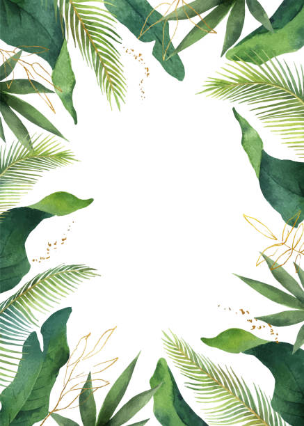 Watercolor vector banner tropical leaves isolated on white background. Watercolor vector banner tropical leaves isolated on white background. Illustration for design wedding invitations, greeting cards, postcards. tropical flower stock illustrations