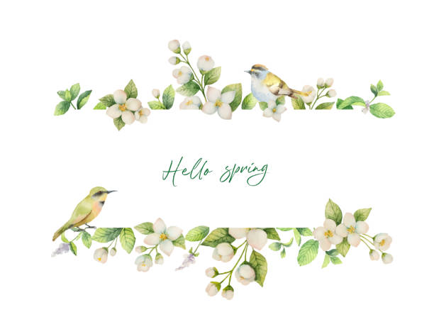 Watercolor vector banner with bird and flowers Jasmine isolated on white background. Watercolor vector banner with bird and flowers Jasmine isolated on white background. Spring illustration for greeting cards, wedding invitations and packaging. bird borders stock illustrations