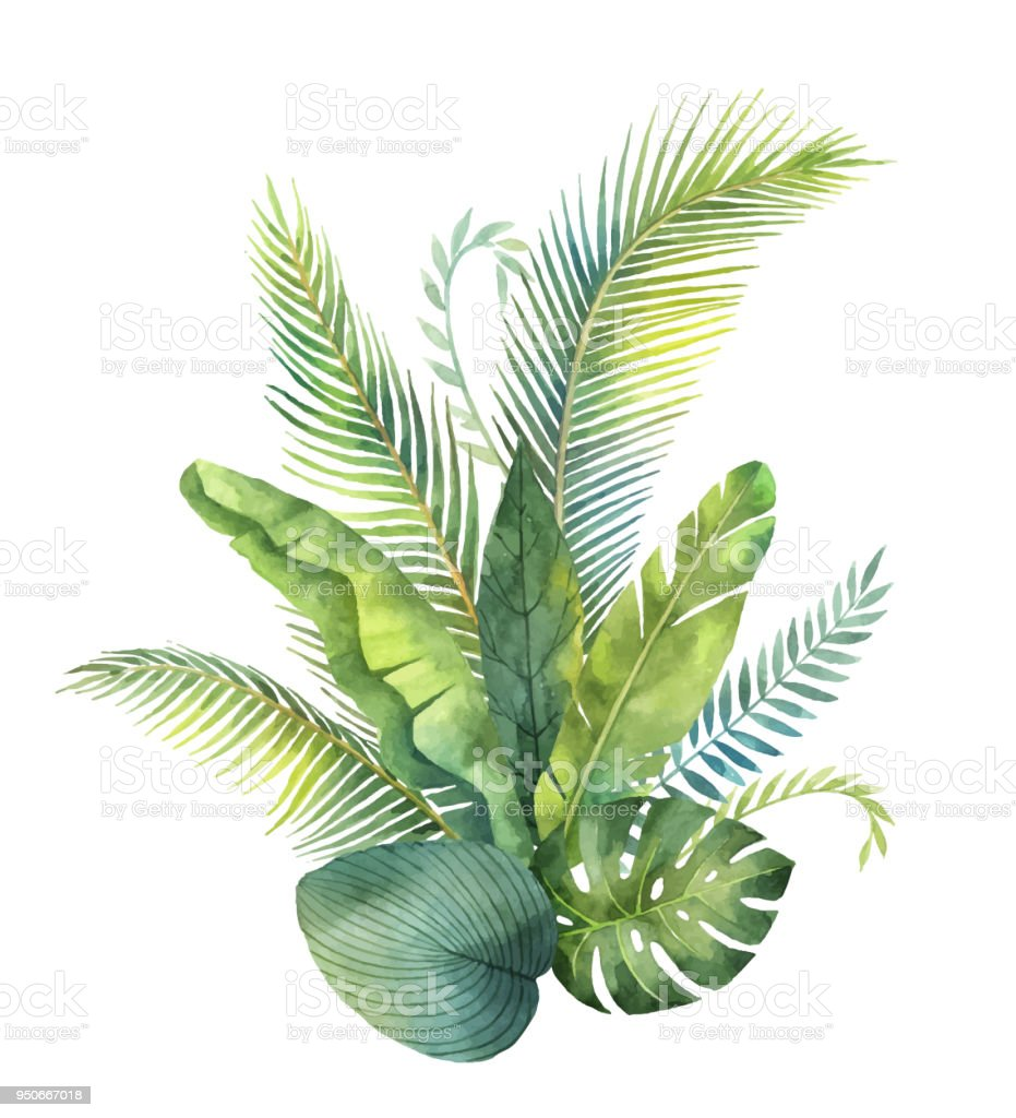 Watercolor vector bouquet tropical leaves and branches isolated on white background.