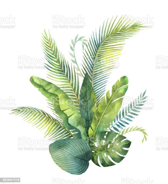 Watercolor vector bouquet tropical leaves and branches isolated on vector id950667018?b=1&k=6&m=950667018&s=612x612&h=g a7mxm vtqynccbvogjjpy 6e1jtrsszdgg6q8uae4=