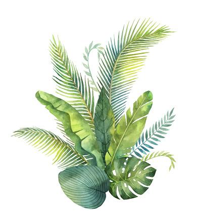 水彩媒介花束熱帶葉子和分支被隔絕在白色背景向量圖形及更多俄羅斯圖片