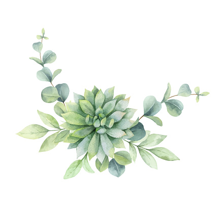 Watercolor vector bouquet with eucalyptus branches and succulent flower isolated on a white background. Hand painted illustration for greeting cards, wedding invitations and more.