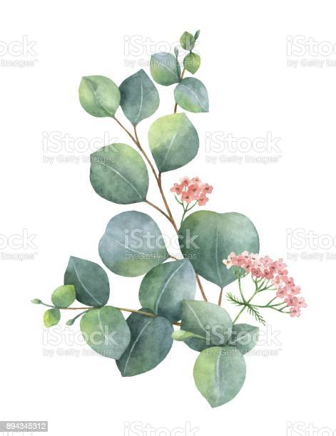 Watercolor vector bouquet with green eucalyptus leaves and branches vector id894345312?b=1&k=6&m=894345312&s=612x612&h=jb77mnzosa mdygwyo3kmnsa8tfnm 9pe tr glmd9o=