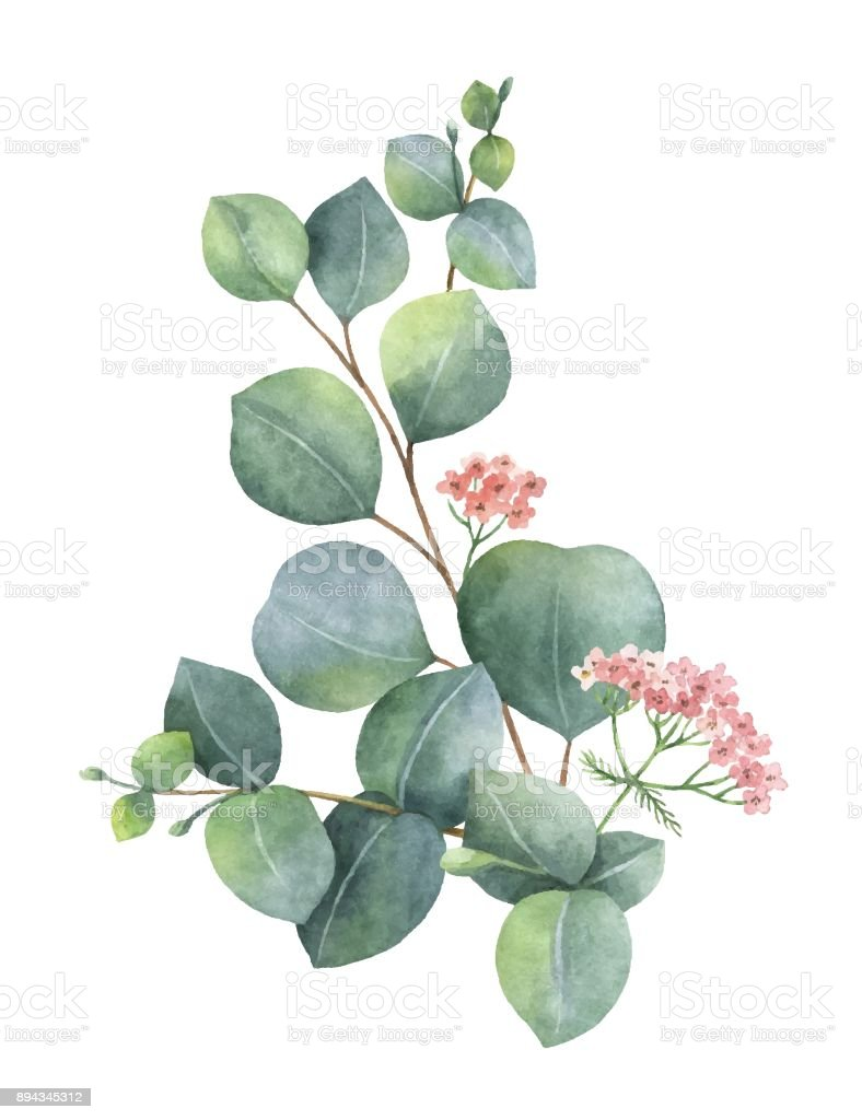 Watercolor vector bouquet with green eucalyptus leaves and branches. vector art illustration
