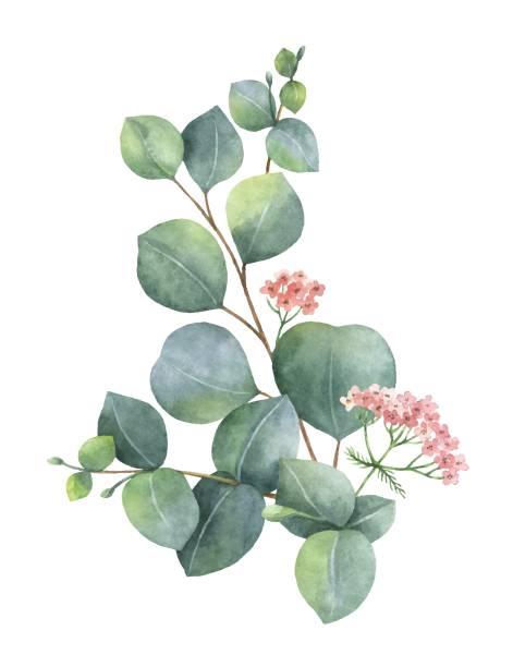bildbanksillustrationer, clip art samt tecknat material och ikoner med akvarell vektor bukett med grön eucalyptus blad och grenar. - eucalyptus