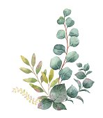 Watercolor vector bouquet with green eucalyptus leaves and branches. Spring or summer flowers for invitation, wedding or greeting cards.
