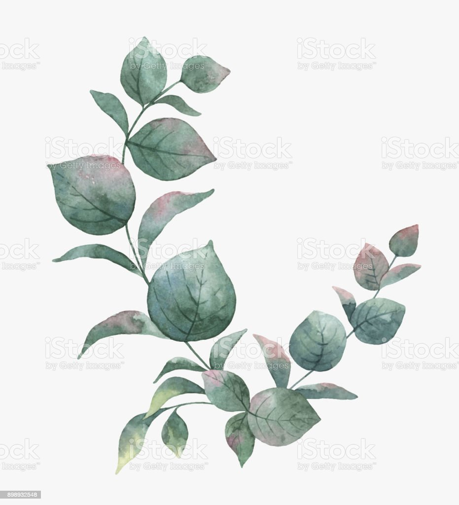 Watercolor vector bouquet with green eucalyptus leaves and for Watercolor greenery