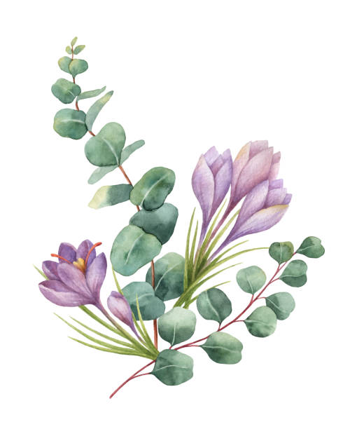 Watercolor vector bouquet with green eucalyptus leaves and flowers of saffron. Watercolor vector hand painted bouquet with green eucalyptus and flowers of saffron. Healing Herbs for cards, wedding invitation, posters, greeting design isolated on white background. branch plant part stock illustrations