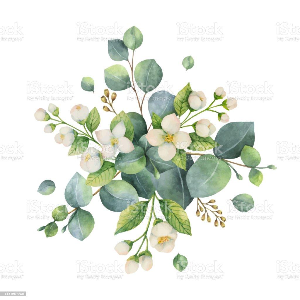 Feuille D Eucalyptus Bouquet bouquet de vecteur aquarelle avec des feuilles deucalyptus