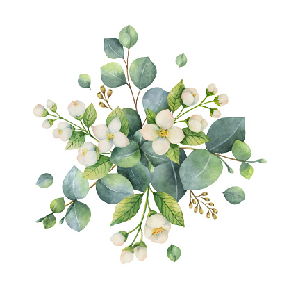 Watercolor vector bouquet with green eucalyptus leaves and flowers.