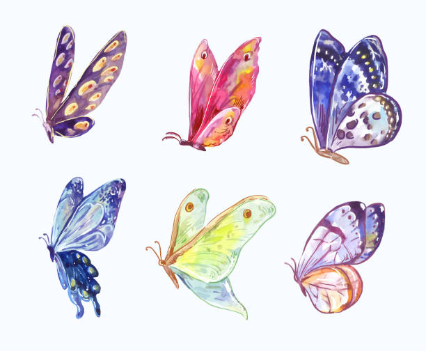 Watercolor vector butterflies in three-quarter view Wings of bright butterflies in watercolor sketch style butterfly insect stock illustrations