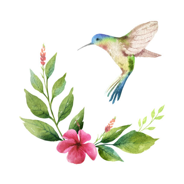 watercolor vector card green leaves, hummingbird and flowers isolated on white background. - exotic animals stock illustrations