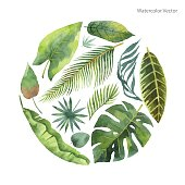 Watercolor vector card of tropical leaves and branches isolated on white background. Illustration for design wedding invitations, greeting cards, postcards.