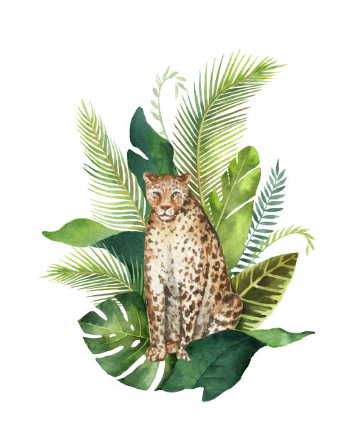 Watercolor vector card with leopard and green tropical leaves isolated on white background. Watercolor vector card with leopard and green tropical leaves isolated on white background. Illustration for design books, magazines about animals, greeting cards, posters, postcards. exotic animals stock illustrations