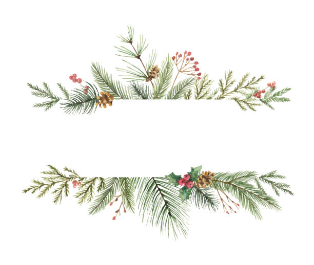 watercolor vector christmas banner with fir branches and place for text. - vintage nature stock illustrations, clip art, cartoons, & icons