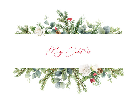 Watercolor vector Christmas banner with fir branches, white rose and eucalyptus. Hand painted illustration for greeting floral postcard and invitations isolated on white background.