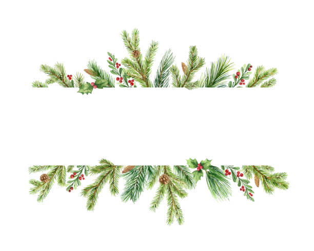 Watercolor vector Christmas banner with green pine branches and place for text. Watercolor vector Christmas banner with green pine branches and place for text. Holiday decoration for greeting cards, poster template and invitations isolated on white background. pine tree stock illustrations