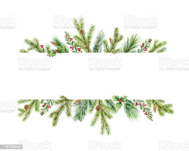 Watercolor Vector Christmas Banner With Green Pine Branches And Place For Text — стоковая векторная графика и другие изображения на тему Pinaceae