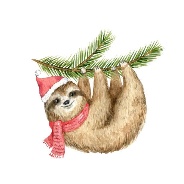 aquarell vektor weihnachtskarte niedlich faultier hängen auf einer tanne zweig. - faul ast stock-grafiken, -clipart, -cartoons und -symbole
