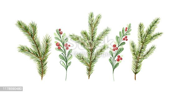 Watercolor vector Christmas card with fir branches and red berries. Illustration for greeting cards and invitations isolated on white background.